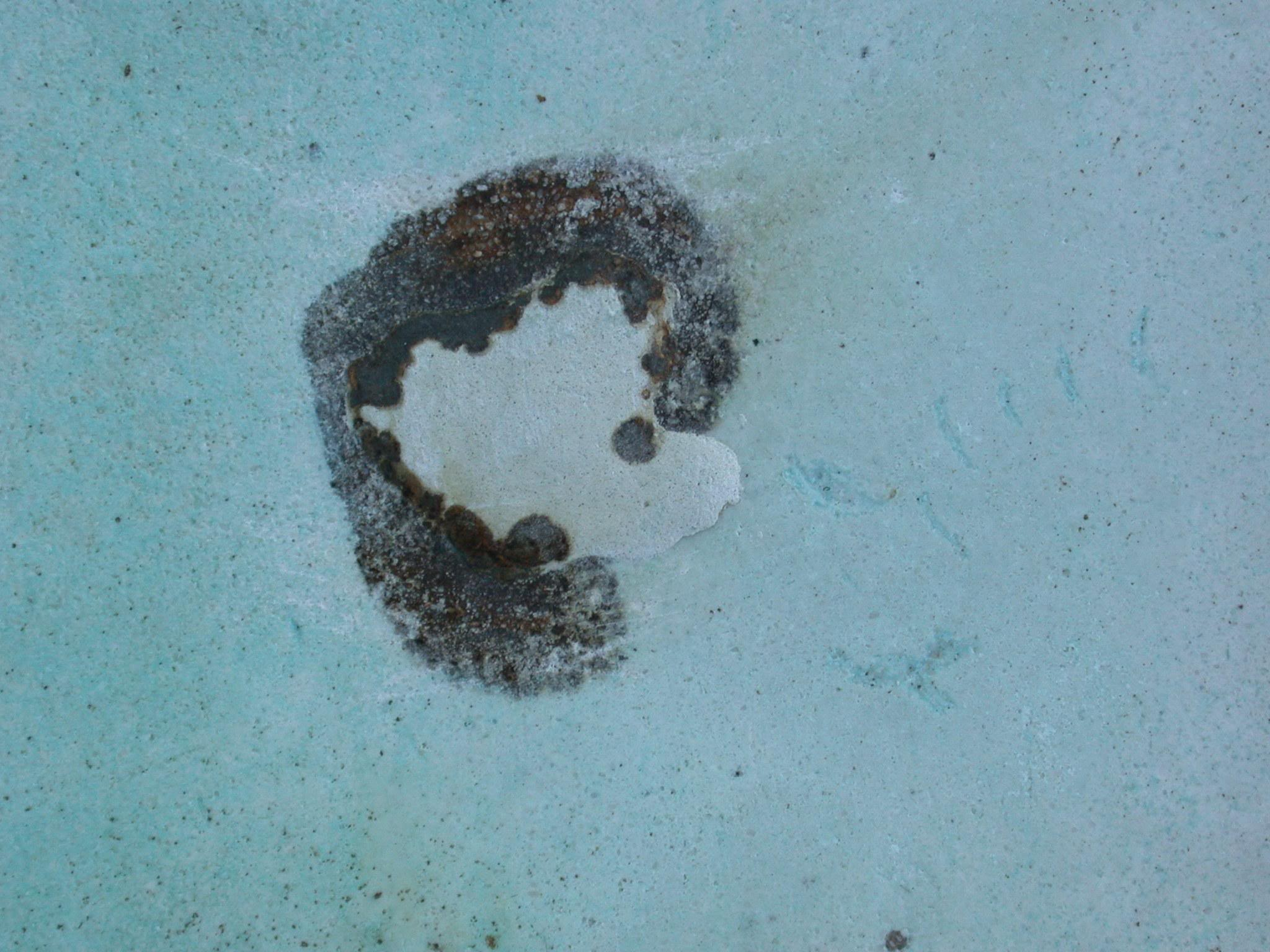 Pool maintenance what types of algae are there red square pools 702 530 7331 for Black spots in the swimming pool