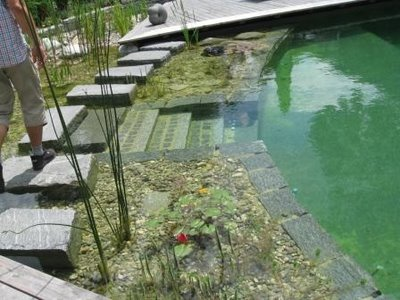 Bionova natural swimming pools red square pools 702 for Koi pond natural swimming pool