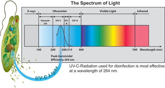 Uv Water Disinfection Lowers Pool Chemical Usage Red